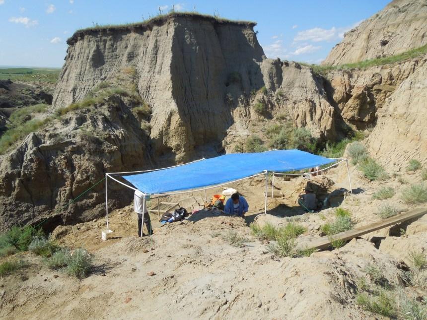 Paleo adventures, paleotology, dino dig, places to dig for fossils, fossils, dinosaur fossils, dinosaurs, south Dakota, Jurassic park, paleontology tours, black hills, where can I find dinosaur fossils